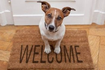 Save Your Dollars While Opening the Door to a New Pet