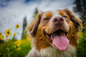 How to Financially Plan for a Dog
