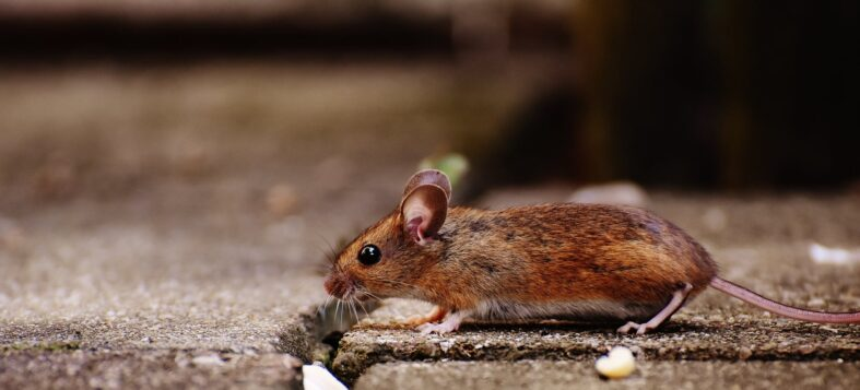 5 Tips for Saving Money on Pest Control